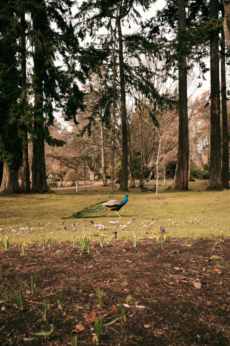 February - Aaron Bergunder